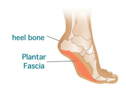 heel bone and plantar fascia